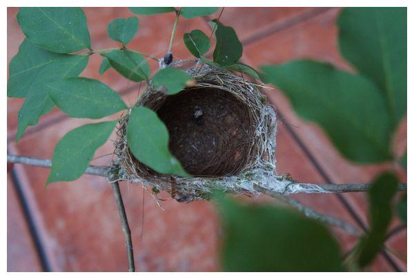 メジロの巣.jpg