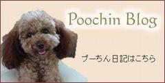 1blog_poochin.jpg